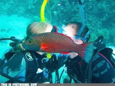 photobombfish